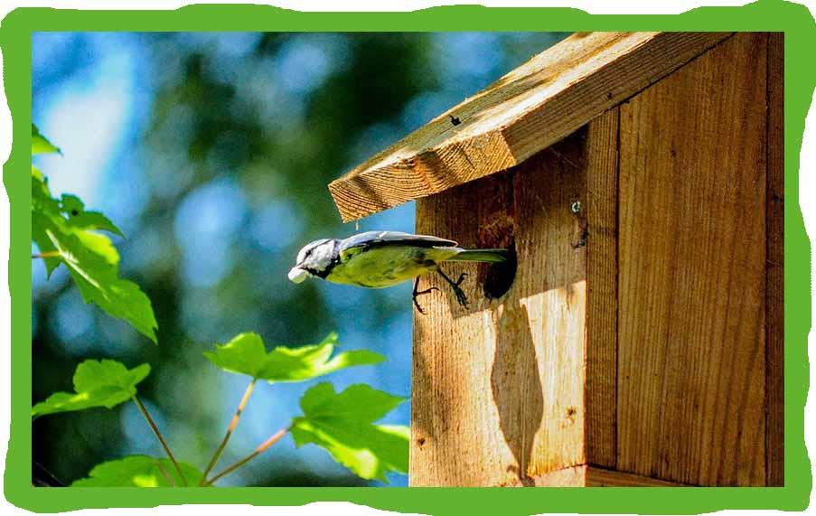 Svět bez ptáčků je pro nás nepředstavitelný